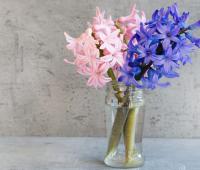 Один раз в год сады цветут: весной все духи